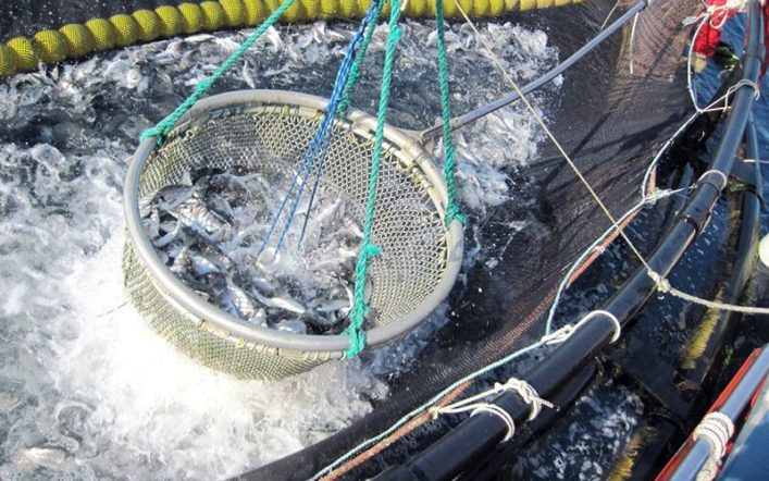 Wireless Developments in Aquaculture Production